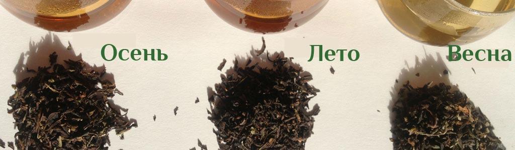 Чай дарджилинг: классификация и виды урожаев